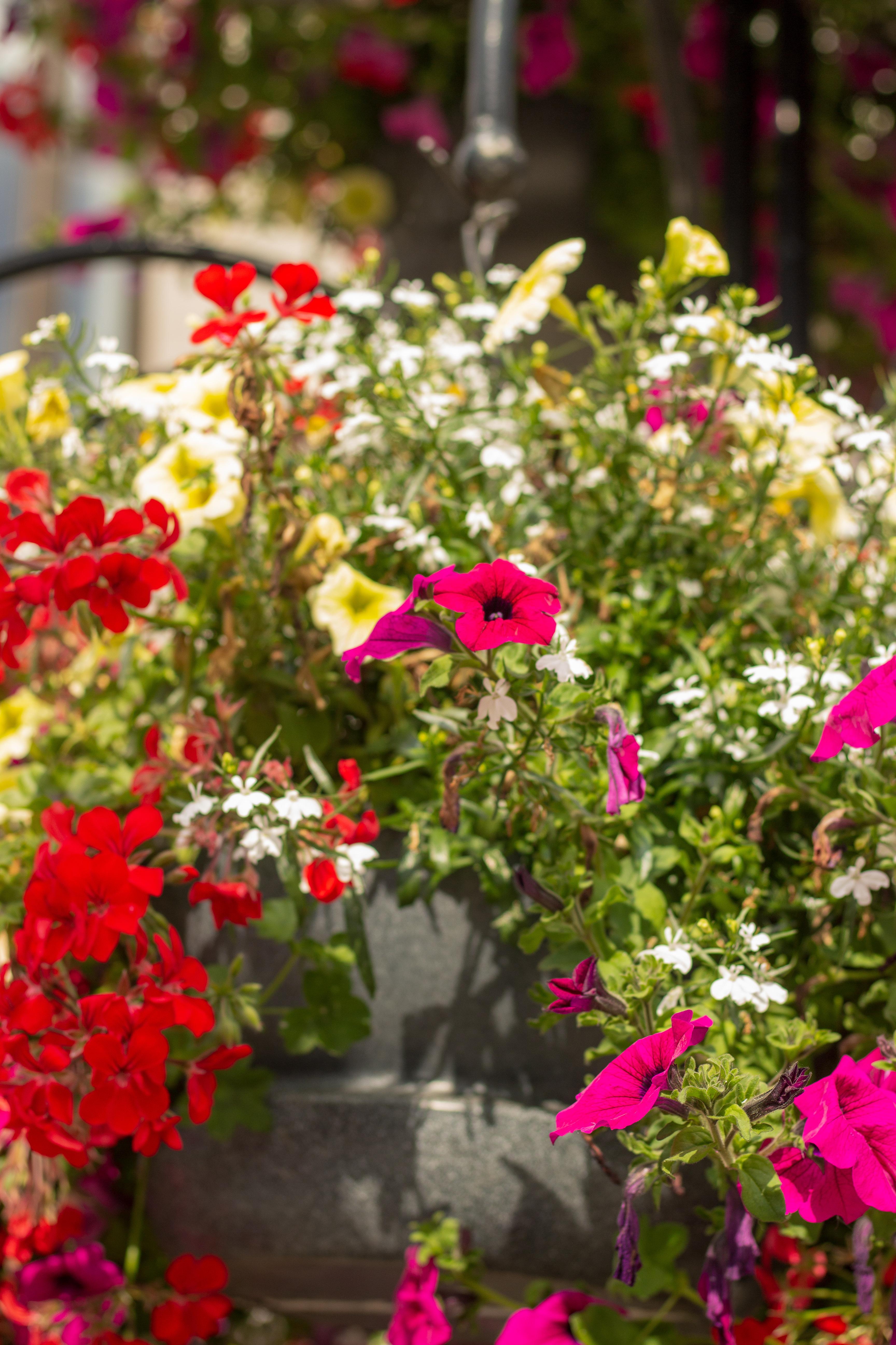 Floral Enhancement