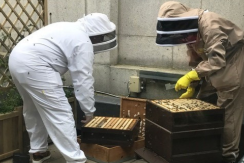 Urban Bee Project